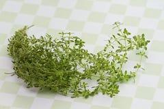 Herb Thyme en fondo a cuadros verde Imagen de archivo libre de regalías