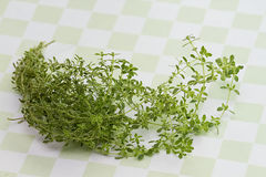 Herb Thyme on Green Checkered Background Royalty Free Stock Image