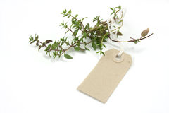 Herb Thyme and label tag Royalty Free Stock Photography