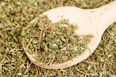 Herb thyme and wooden spoon Royalty Free Stock Image