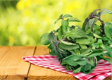 Herb. Variation collection basil bunch lemon balm fennel royalty free stock images