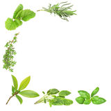 Herb Varieties. Abstract of herb leaf sprigs of lavender, lemon balm, thyme, bay, sage and basil, over white background stock photos