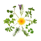 Herb and Wild Flower Abstract. Herb leaf selection in abstract circular design with a wild dandelion flower in the center stock photos