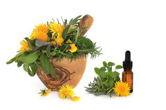 Herb and Wild Flower Therapy. Wild dandelion and gorse flowers with sage, rosemary and lemon balm herbs, in an olive wood mortar with pestle and aromatherapy royalty free stock photo