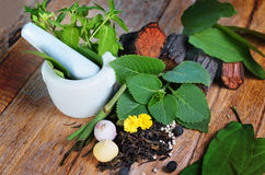 Herb With Still Life Concept Royalty Free Stock Photos