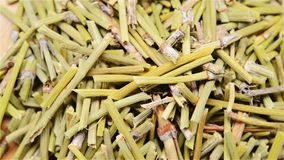 Herba Ephedrae ή κινεζικό χορτάρι Ephedrs απόθεμα βίντεο