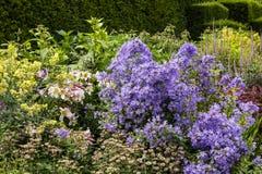 Herbaceous граница английского сада страны Стоковая Фотография RF