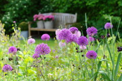 Herbaceous граница с ощущением пурпура лукабатуна Стоковые Изображения