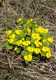 Первые цветки весны стоковые фотографии rf