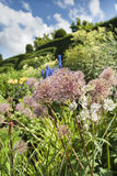 Herbaceous Border Royalty Free Stock Image