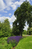 Herbaceous border. Landscape in park showing herbaceous border with bed of bee-loving catmint Stock Photography