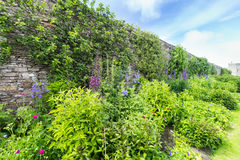 Herbaceous border Stock Photography