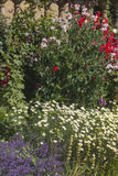 Herbaceous flower bed Royalty Free Stock Image