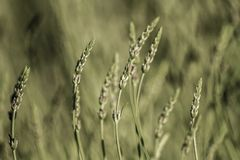 Herbaceous Plants in a Meadow Royalty Free Stock Photos