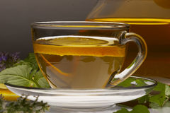 Herbaceous tea Royalty Free Stock Photos