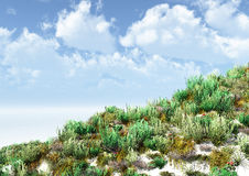 Herbaceous vegetation on a sandy surface Stock Photo