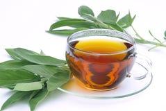 Herbaciana mędrzec 01 Fotografia Stock