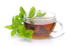 Herbaciana Miętówka zdjęcie stock