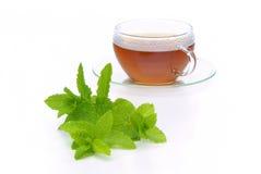 Herbaciana Miętówka fotografia stock