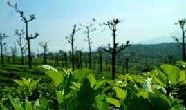 Herbaciana nieruchomość Zdjęcie Stock