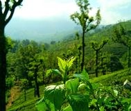 Herbaciana nieruchomość Obraz Stock
