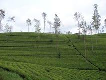 Herbaciana nieruchomość fotografia stock