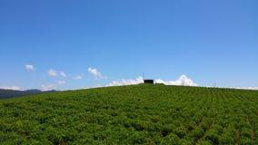 Herbaciana nieruchomość w Srilanka Nuwaraeliya obraz royalty free