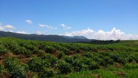 Herbaciana nieruchomość w Srilanka Nuwaraeliya zdjęcie royalty free