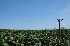 Herbaciana plantacja Obraz Stock