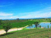 Herbaciana plantacja, Chaingrai, Tajlandia, Azja Obrazy Stock