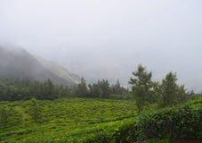 Herbaciana plantacja i Mgliste góry Naturalny tło - Zielony krajobraz - zdjęcia stock