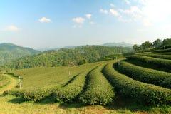 Herbaciana plantacja w średniogórzu fotografia stock