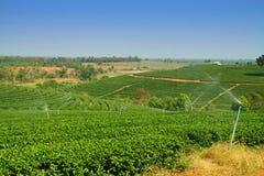 Herbaciana plantacja w średniogórzu obrazy royalty free