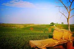 Herbaciana plantacja w zimie Zdjęcia Stock
