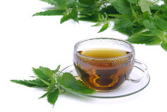 Herbaciana pokrzywa 01 Zdjęcie Royalty Free