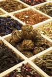 herbaciana różnica Obrazy Stock