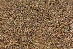 Herbaciana ziele tekstura zielona herbata Organicznie wysuszeni zielona herbata liście Fotografia Stock