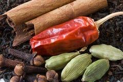 herbaciane Chai pikantność Obraz Stock