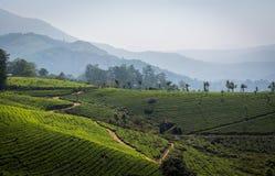 Herbaciane plantacje Obrazy Stock