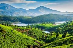 Herbaciane plantacje i rzeka w wzgórzach Kerala, India zdjęcie stock