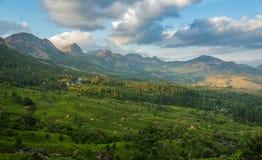 Herbaciane plantacje w wzgórzach zdjęcie royalty free
