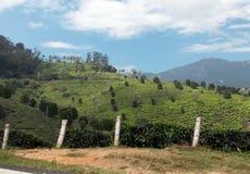 Herbaciane plantacje widoczne od drogi Obraz Royalty Free