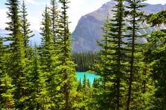 Herbacianego domu spacer, Jeziorny Louise, Alberta, Kanada Zdjęcie Royalty Free