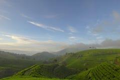 Herbacianej plantaci krajobraz Zdjęcie Stock