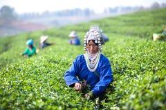 Herbaciani liście Obraz Royalty Free
