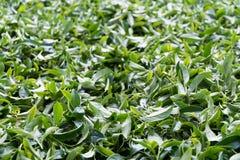 Herbaciani liście Obrazy Stock