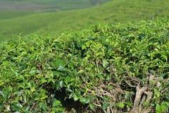 Herbaciani ogródy Zdjęcie Stock