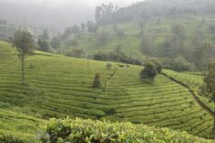Herbaciani ogródy w India Zdjęcia Stock