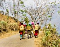 Herbaciani zbieracze darjeeling Zdjęcie Royalty Free