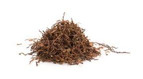 Herbaciany badyl obraz stock
